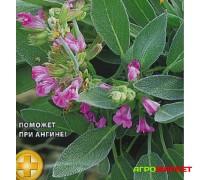 Шалфей лекарственный 0,3г АС Тимирязевец (б.п.)