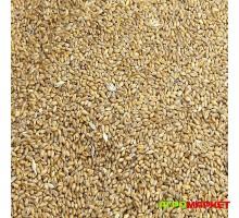 Пшеница посевная нефасованная