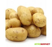 Картофель семенной Гала среднеранний 70-80 дней белый 1/38кг